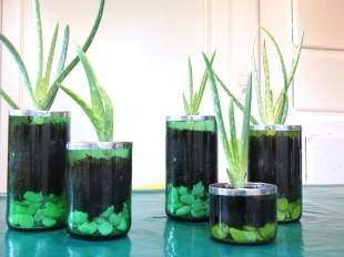 Aloe vera, récipients de verre recyclé.
