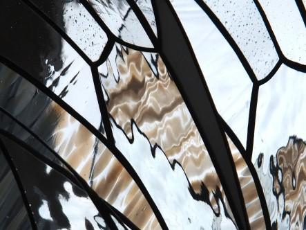 Papillon blanc -détail - Tous droits réservés